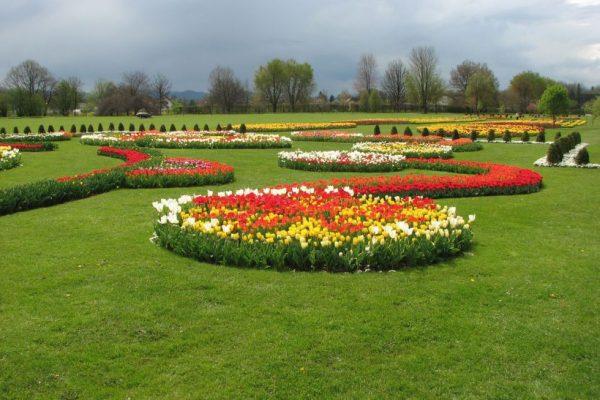 Арборетум тюльпаны